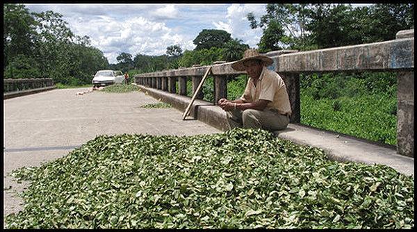 Figure 2.0 - Coca farmer in Chapare, Bolivia